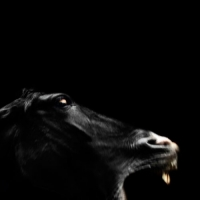 http://pabloga.com/es/files/gimgs/th-13_13_caballo-negro-mordisco.jpg