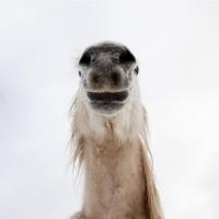 http://pabloga.com/es/files/gimgs/th-13_13_caballo.jpg