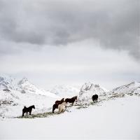 http://pabloga.com/es/files/gimgs/th-13_13_caballos-nieve-1_v2.jpg