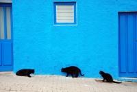 http://pabloga.com/es/files/gimgs/th-13_13_gatos-negros.jpg