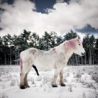 http://pabloga.com/es/files/gimgs/th-13_13_unicornio.jpg