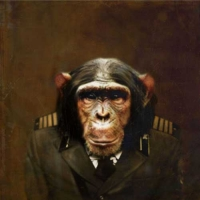 http://pabloga.com/es/files/gimgs/th-5_5_chimpance.jpg